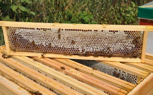 Miel angular en panal