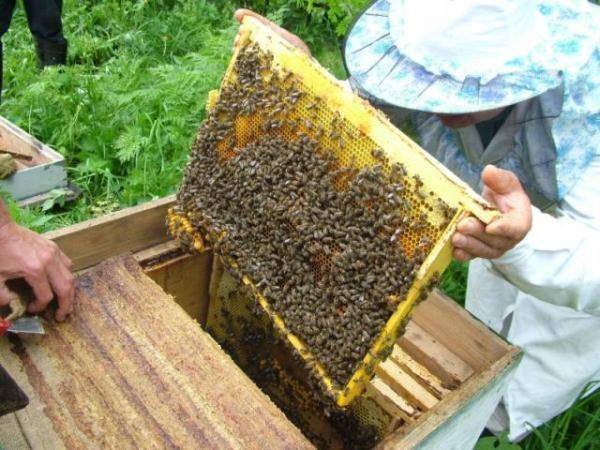 Marco con las abejas