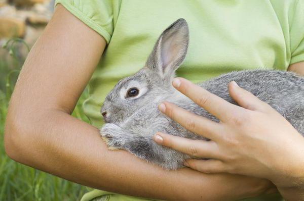 Matanza de conejos