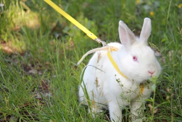 Cómo cuidar a los conejos.