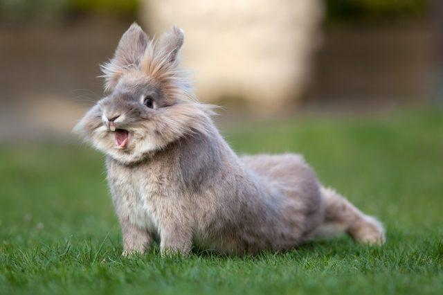 Rinitis en conejos: síntomas, tratamiento y prevención.