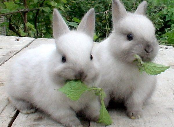 Que alimentar a los conejos.