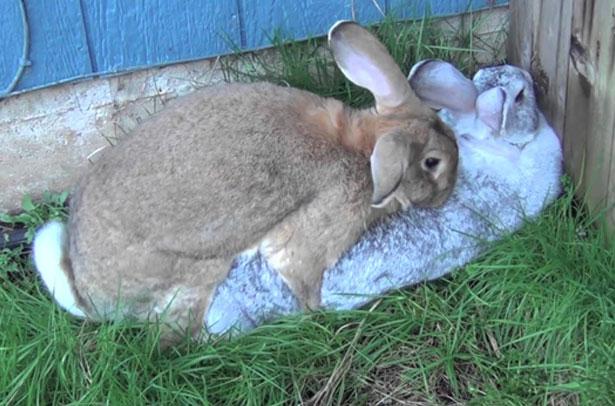 Estuche de conejo