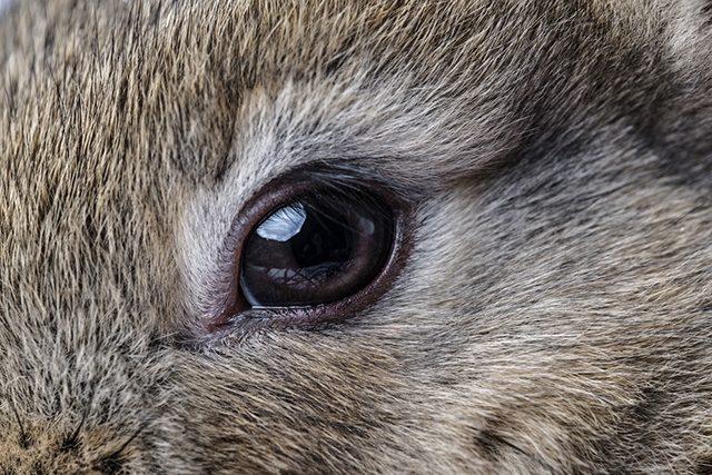 Enfermedades oculares del conejo