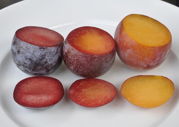 Los híbridos más inusuales de albaricoque, melocotón, ciruela y manzana, su descripción, ventajas y desventajas.