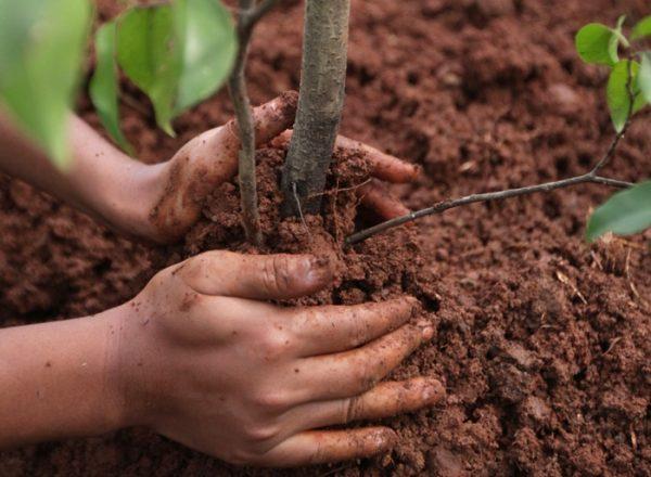 Cómo y cuándo es mejor plantar y replantar el drenaje: una guía paso a paso para plantar y cuidar