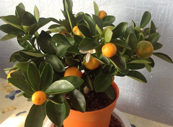 Habitación mandarina