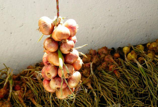 Cómo almacenar las cebollas