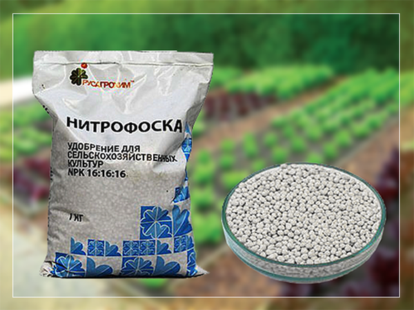 Fertilizante nitrophoska