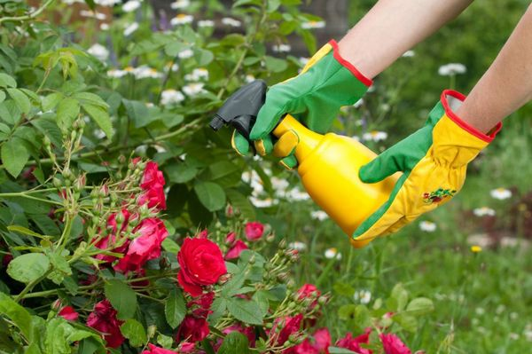 Cuando se trabaja con fertilizante, es imperativo usar agentes protectores.