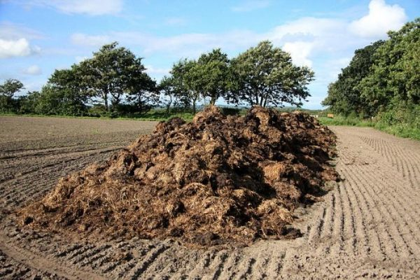 Korovyak: el fertilizante orgánico natural recibido como resultado de los desechos de animales grandes