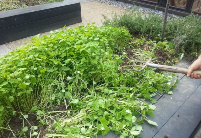 siderata en el jardin