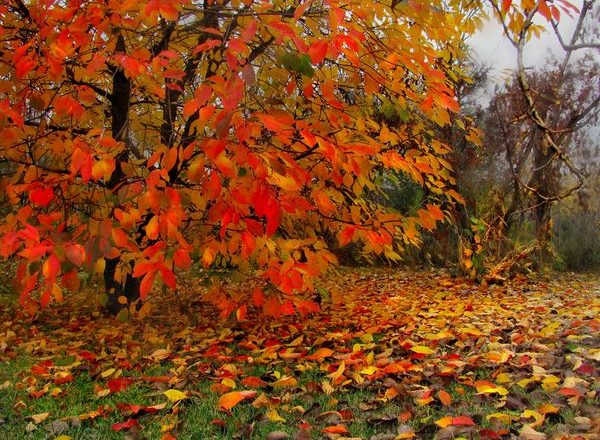 Aderezo superior de cereza en otoño.