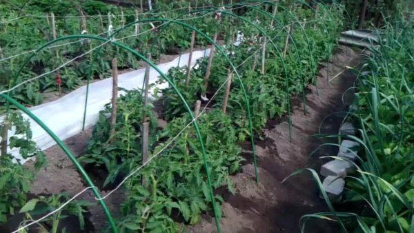 Tomates y fresas
