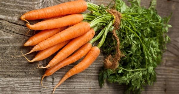 Plantando zanahorias usando el método kizima